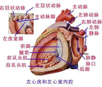 人体内脏解刨图 - oyyx168 - oyyx168的博客