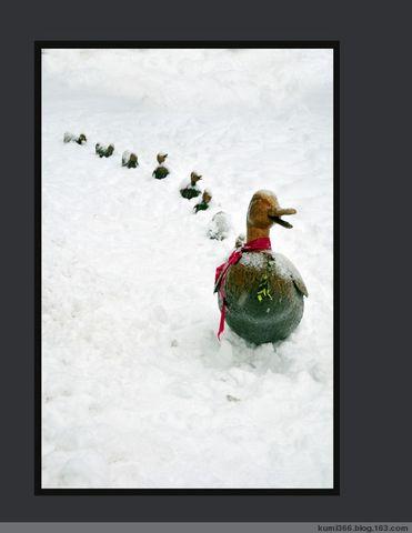 波士顿雪景一瞥 - kumi366 - kumi366的博客