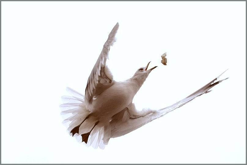 动物精彩瞬间2 - 静中有动 - 静中有动