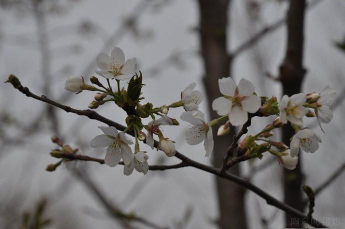 春到玉渊潭之一 - 陶东风 - 陶东风