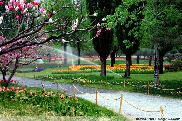 植物园的春天 - 刘炜大老虎 - liuwei77997的博客