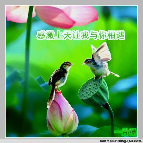 最新留言图片 - 林之春 - 林之春的博客