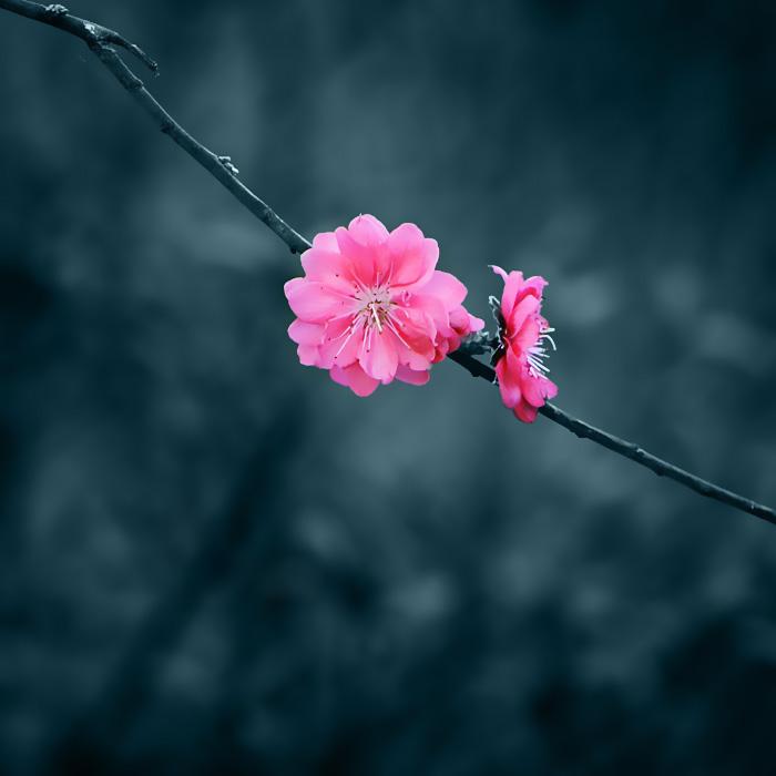 春天的信息!【赏心悦目美图】 - 無為居士 - 無為齋