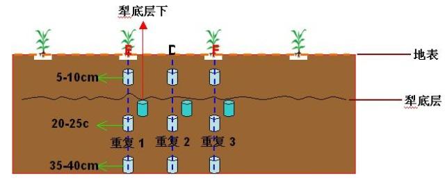 土壤剖面调查报告