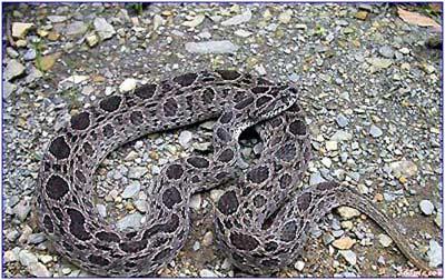 [原创散文]关于我与蛇的故事 - 梧叶飘黄 - 梧叶飘黄的博客