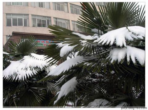 (原创)下雪啦! - 苏北亮嗓 - 苏北亮嗓!