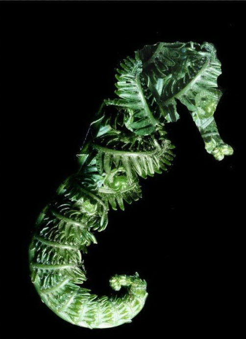 动植物杂交的巨可怕后果/组图