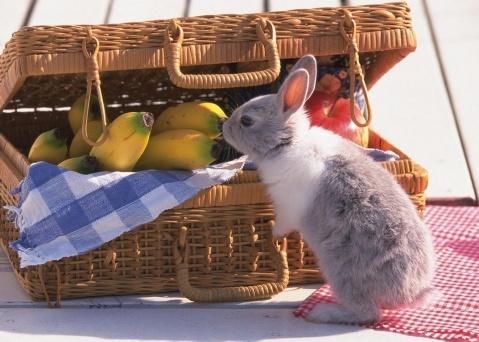 一则小兔子和大兔子的童话故事 - 宁静如水 - ˇ.编时光