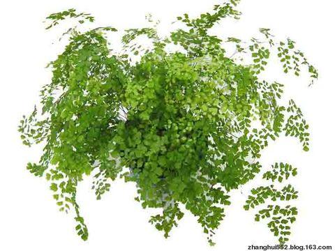 哪些植物适合在室内摆放 - 现实~梦 - 现实~梦的博客