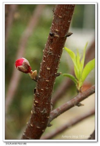桃花含笑送春风 - 汝裕有约 -