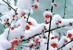 相见欢·无言听雪 - 一叶知秋 - mahuban的博客