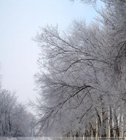 伊犁雾凇 - 游牧天山 - 游牧天山的博客