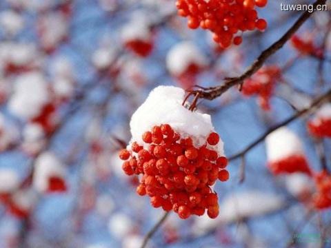 望  雪 - 田野 - 田野的博客:来自冰窟的声音