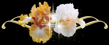 【素材超市】鲜花分隔线 - 落海里的星 - 星星音画素材