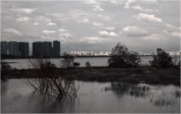 [原]深圳·十一·后海湾岸边 - Tarzan - 走过大地