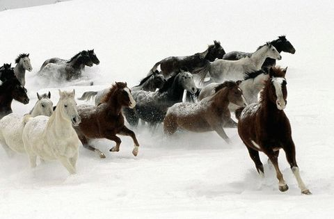 马的说法 - xulufang88 - xulufang88的博客