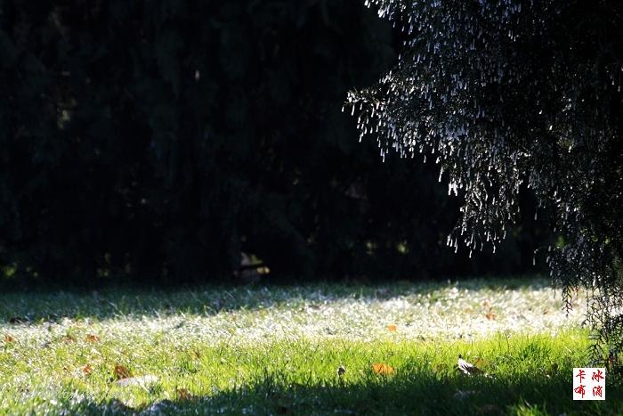 冬天即景(原创摄影) - 冰滴卡布 - l-j-wei的个人主页