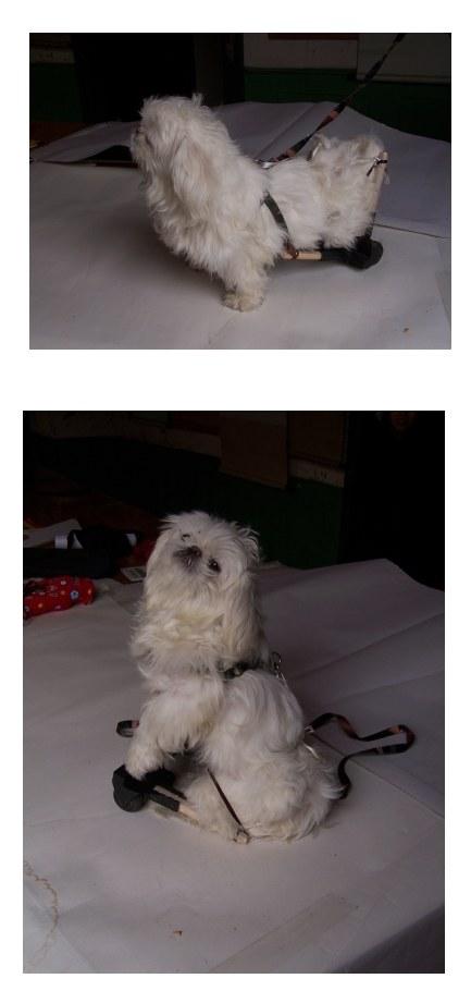 海绵纸小狗贴画