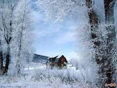 你的风雪的记忆也是我的记忆【原创】 - 红梅花儿开 - 欢迎进入红梅花儿开乐园