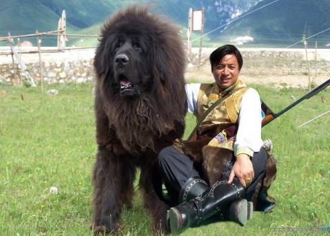 狗的趣谈 - 右岸左人 - 烟雨行囊:右岸左人的部落客