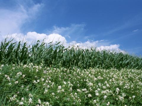 引用  谁能种出这样的美丽(农村的田野)* - 爱在明天 - 爱在明天