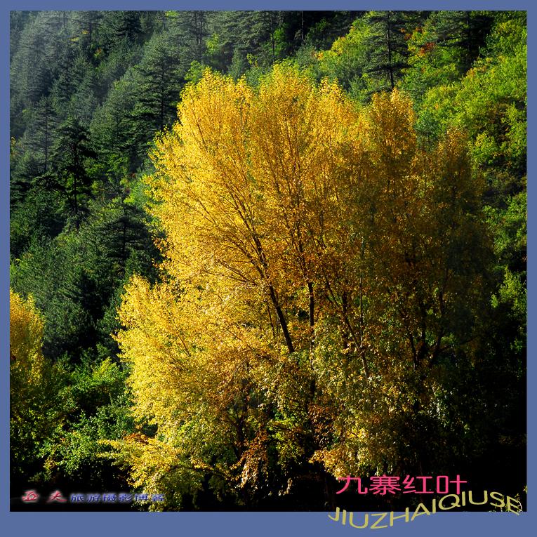 (原摄)九寨秋色之十六 - 高山长风 - 亚夫旅游摄影博客