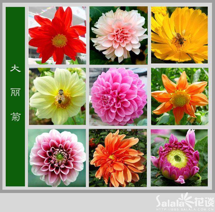 百花图谱 - qing.guohua - qing.guohua的博客