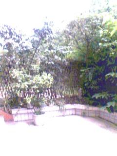 小院秋景          [原] - 梅魂 - 梅魂 欢迎你来做客。