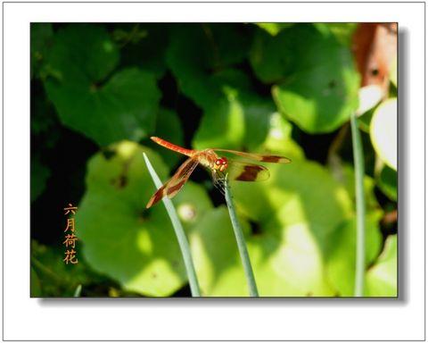 六月荷花摄影诗歌《水无涯》(24) - 六月荷花 - 六月荷花的池塘