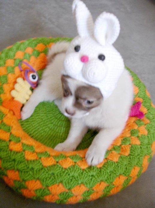 2010年06月14日 - 钩针姐姐 - 钩针钩花博客/crochet blog