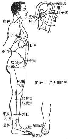 十二经脉、奇经八脉高级循环动画演示 - ☆☆阴阳学说☆☆ - 阴阳学说欢迎您QQ:627304856