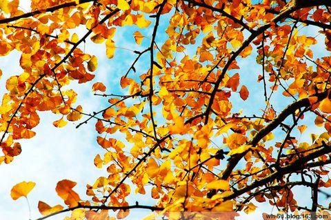 秋天的童话 - 江河海 - 江河海的博客