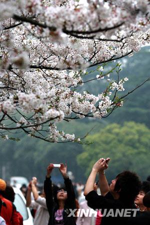 3月21日,游客在武汉大学校园内拍樱花。新华社发(陈靖文 摄)