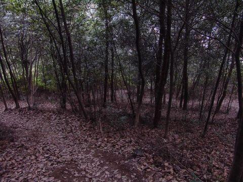 [原创摄影]山上长着的野樱花 - 飞飞 - 蝴蝶飞飞