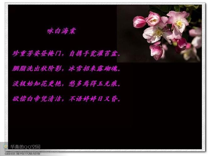 红楼诗意 - 苍狼 - zhang.meng.long 的博客