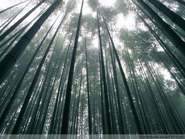 (原创)依韵和老牛先行《赞竹》 - 山竹 - 山竹的博客