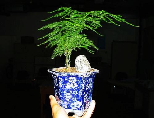 我的花草(2008-06-07) - lnwam - 厉楠征途