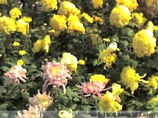 七绝.江南十月雨 - 春珲 - sxz-1000的博客