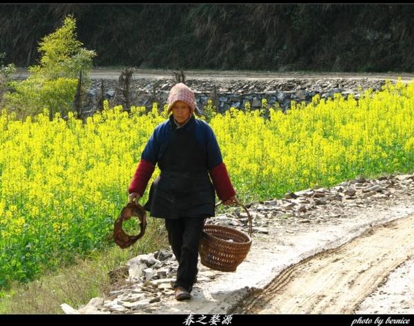 『原创摄影』春色无边,唯见粉墙黛瓦吹黄花…… - 王工 - 王工的摄影博客