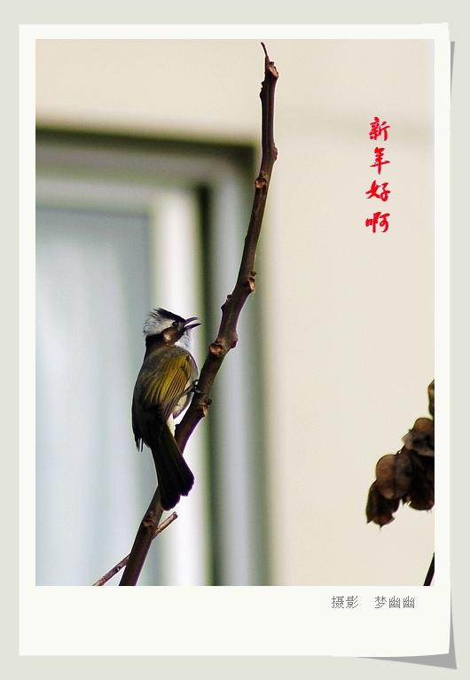 【原创】春节小鸟来拜年 - 梦幽幽 - 梦幽幽原创摄影工作室