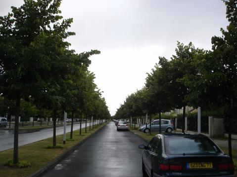 法国巴黎的行道树(三)椴树 - pfspfs666.popo - 反三的博客