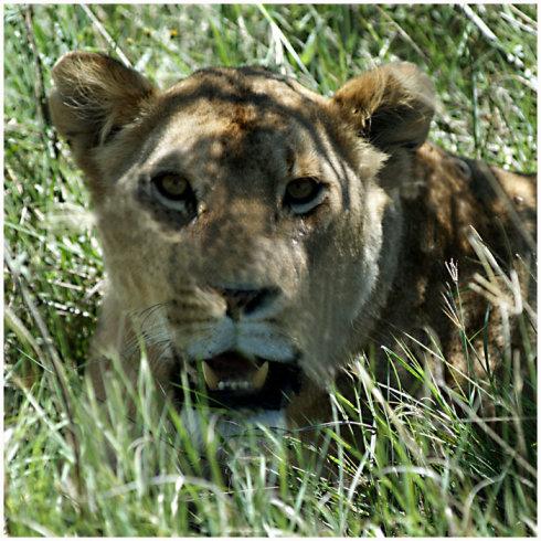 狂野东非-坦桑尼亚《三》 - Y哥。尘缘 - 心的漂泊-Y哥37国行