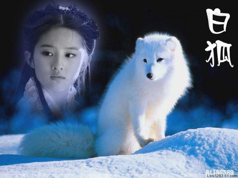 爱 恋 白 狐 心 曲     文:红尘倩女 - 莲香盈袖 - 莲香盈袖的博客