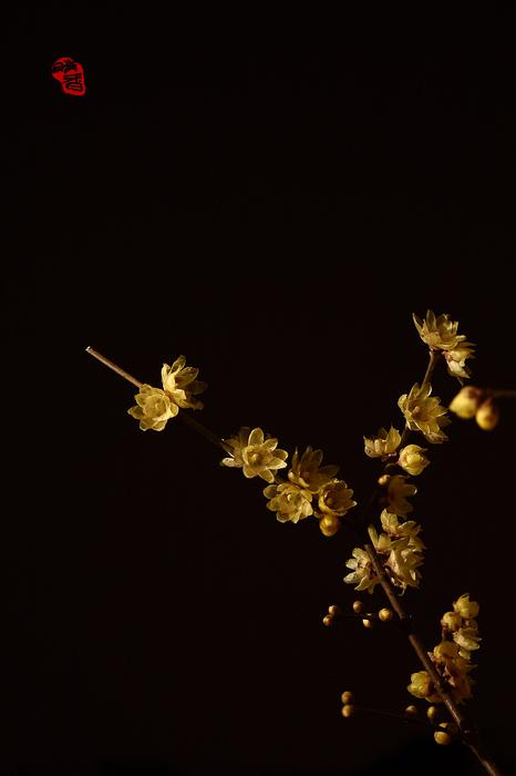 梅花香自暗夜来 - 小桥流水 - 转眼之间