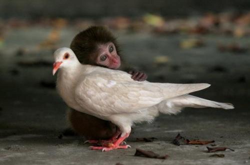 """来自一张环保图片的诉说:它们需要""""爱"""""""