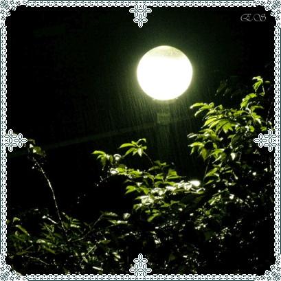 我喜欢天上的月亮是谁