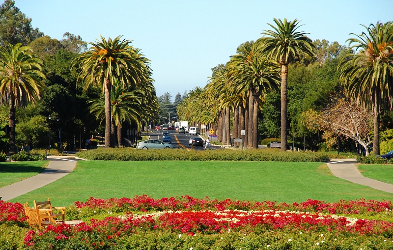加州阳光(二十九)___斯坦福如此美丽 - 西樱 - 走马观景