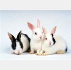 原创我加入了兔子集中营[图文] - 微尘 - 消化百味  享受快乐