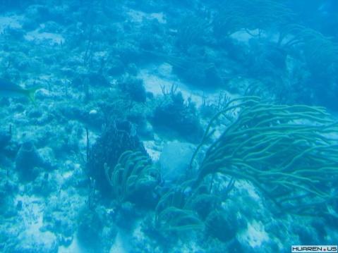 在那水晶般的加勒比海上(十九) - 朵儿 - 朵儿