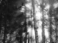 经典黑白自然主题素材 - 理睬 - 理睬